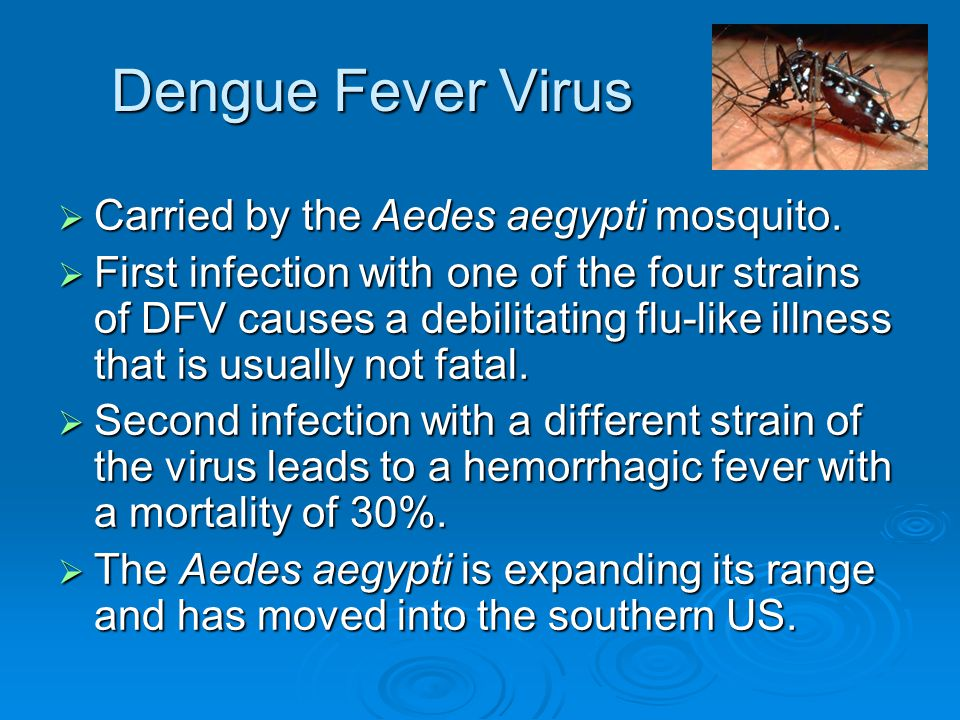 Dengue Fever Virus  Carried by the Aedes aegypti mosquito.