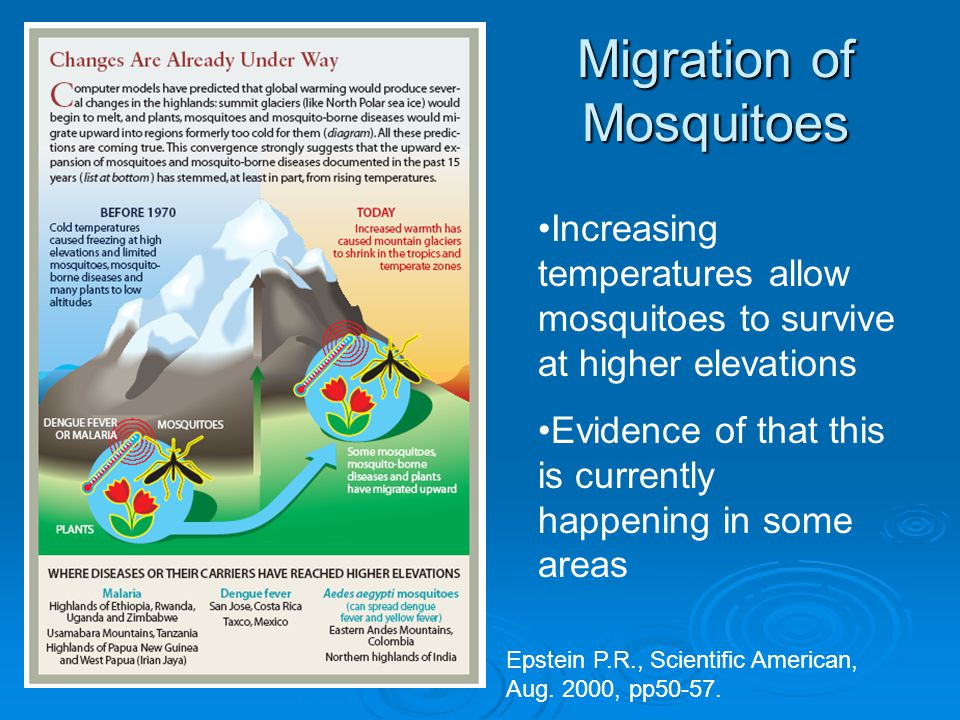 Migration of Mosquitoes Increasing temperatures allow mosquitoes to survive at higher elevations Evidence of that this is currently happening in some areas Epstein P.R., Scientific American, Aug.