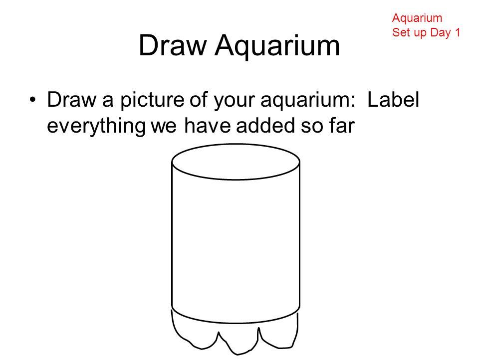 Draw Aquarium Draw a picture of your aquarium: Label everything we have added so far Aquarium Set up Day 1