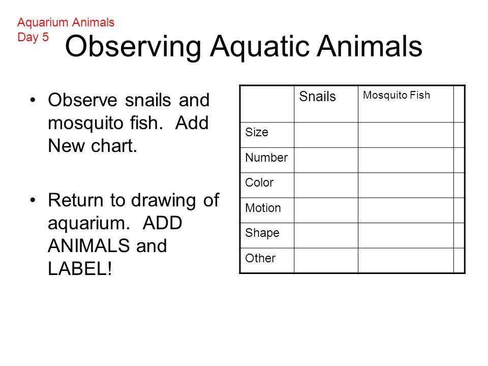 Observing Aquatic Animals Observe snails and mosquito fish.