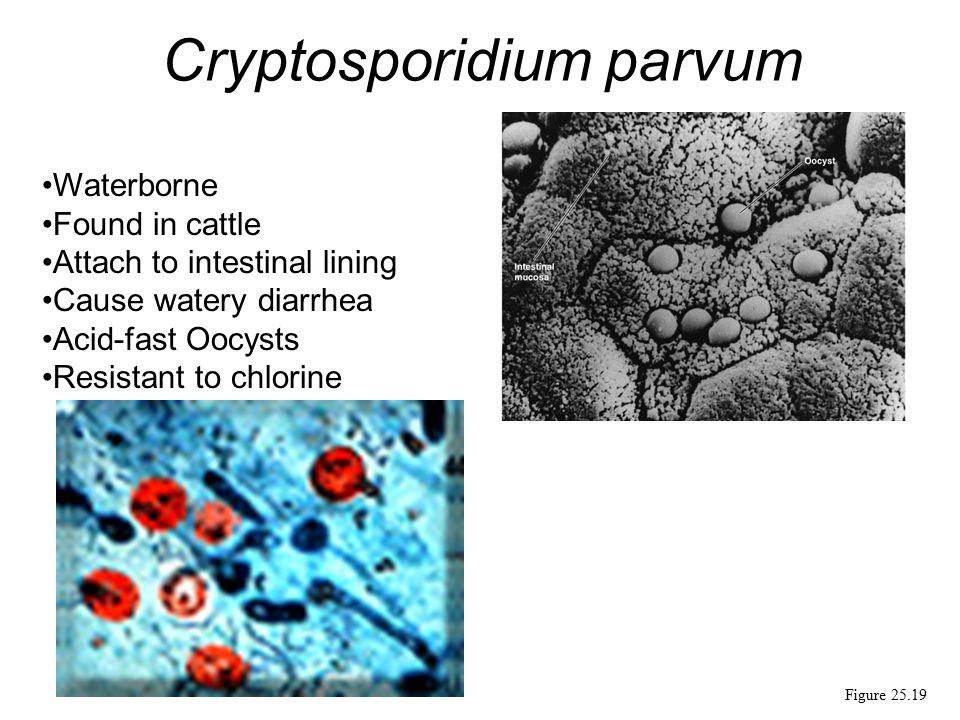 """Presentation """"Eukaryotic Microbes Parasites Protozoa, Helminths ..."""