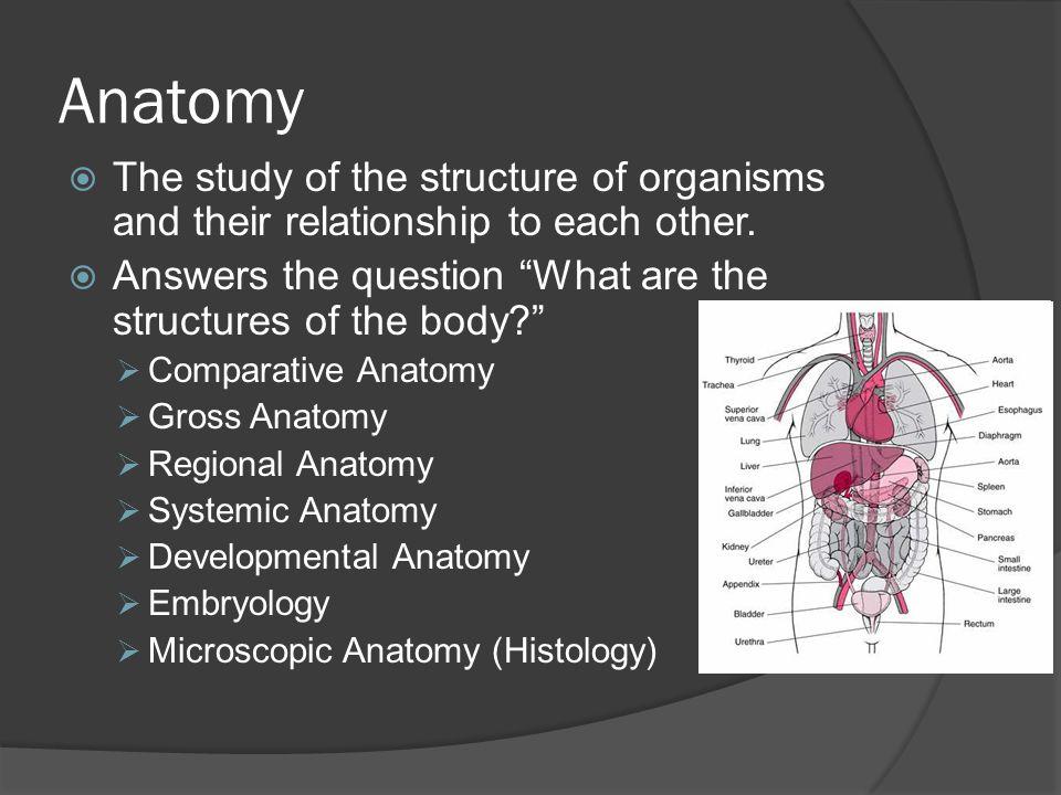 anatomy structure