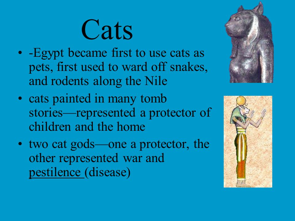Cats -Egypt became first to use cats as pets, first used to ward off snakes, and rodents along the Nile cats painted in many tomb stories—represented a protector of children and the home two cat gods—one a protector, the other represented war and pestilence (disease)