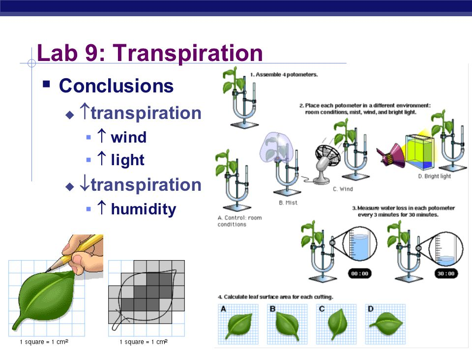 plants transpiration lab essay Transpiration lab write up essay then the hypothesis can be factors that increase evaporation will increase transpiration plants transpire actively in the.