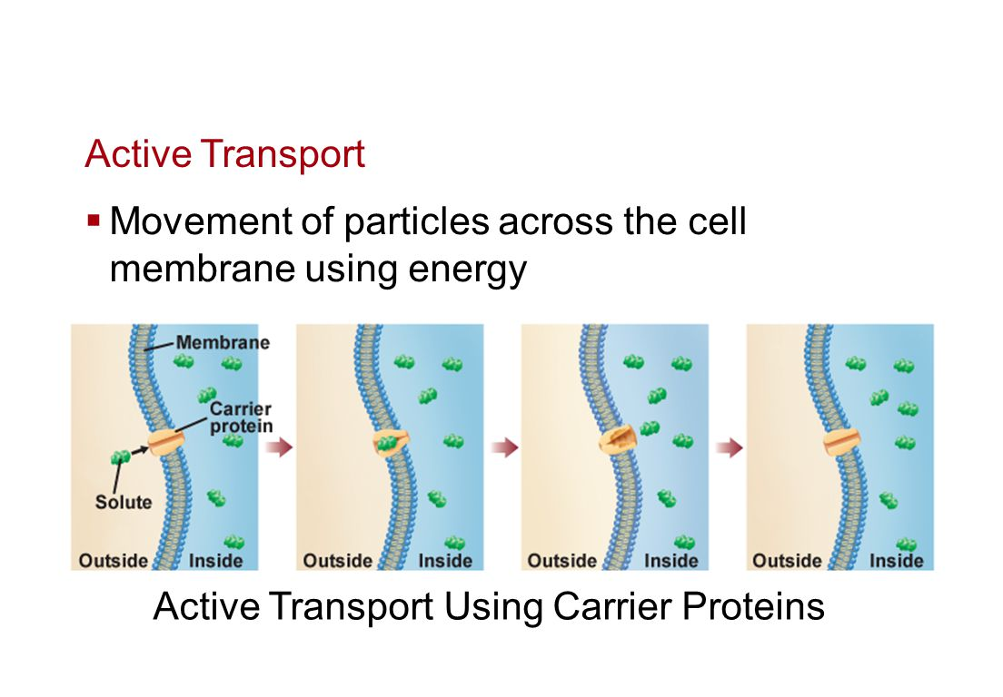 Active transport [ATP]Requires the cell to spend energy [ATP] Transport proteins can move solutes across a membrane against [up] a concentration gradient