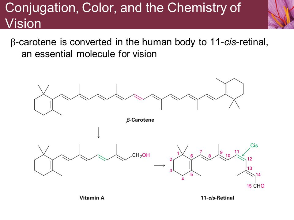  -carotene is converted in the human body to 11-cis-retinal, an essential molecule for vision Conjugation, Color, and the Chemistry of Vision