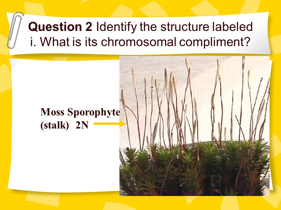 Moss Sporophyte Labeled