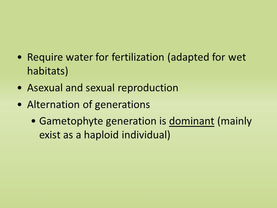 Require water for fertilization (adapted for wet habitats) Asexual and sexual reproduction Alternation of generations Gametophyte generation is dominant (mainly exist as a haploid individual)