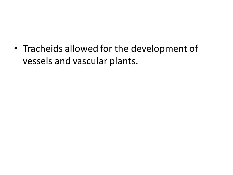 Tracheids allowed for the development of vessels and vascular plants.
