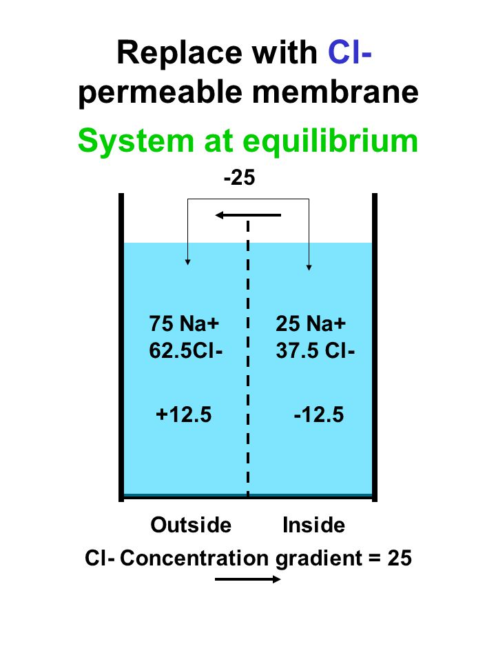 75 Na+ 62.5Cl- 25 Na Cl- Replace with Cl- permeable membrane OutsideInside Cl- Concentration gradient = 25 System at equilibrium
