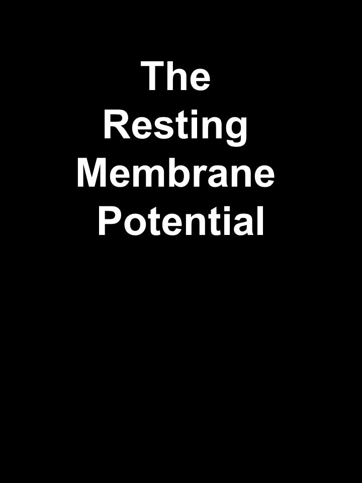 The Resting Membrane Potential