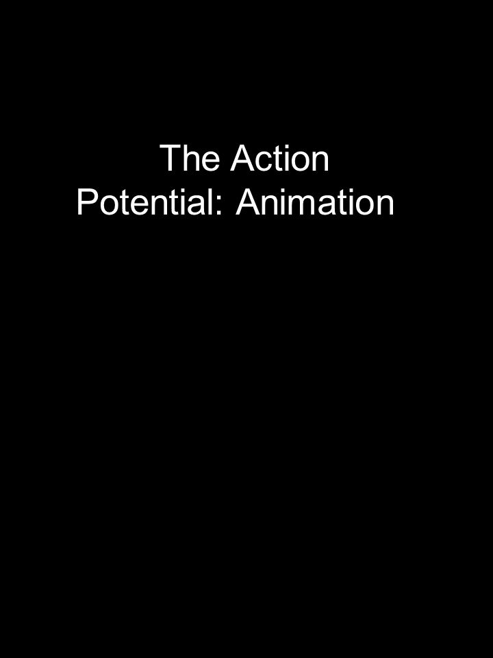 The Action Potential: Animation