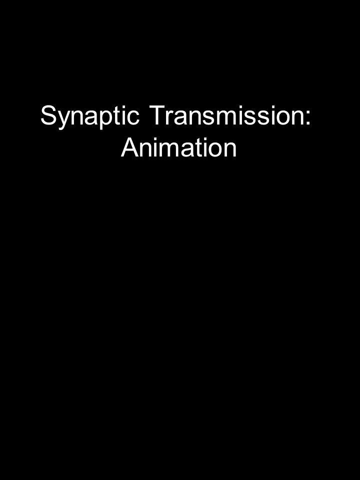Synaptic Transmission: Animation
