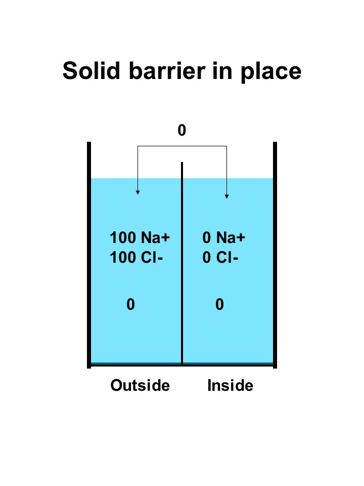 100 Na+ 100 Cl- 0 Na+ 0 Cl- Solid barrier in place 0 00 OutsideInside