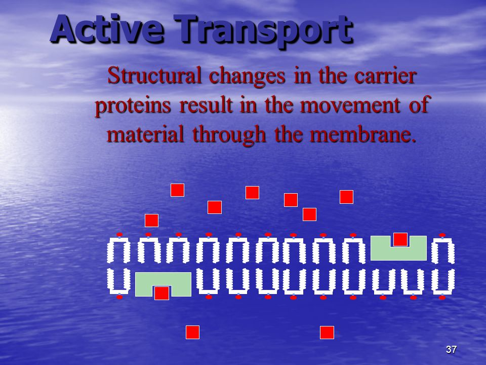 36 Active Transport Movement involves the use of ATP from aerobic respiration to supply energy
