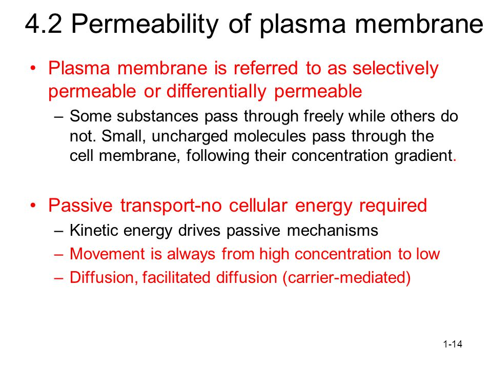 Permeability of plasma membrane Plasma membrane is referred to as selectively permeable or differentially permeable –Some substances pass through freely while others do not.