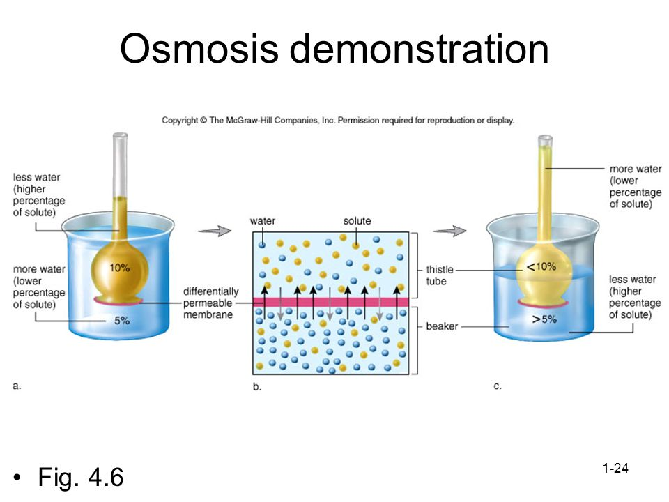1-24 Osmosis demonstration Fig. 4.6
