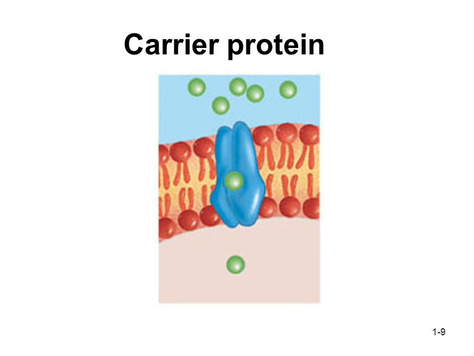 1-9 Carrier protein