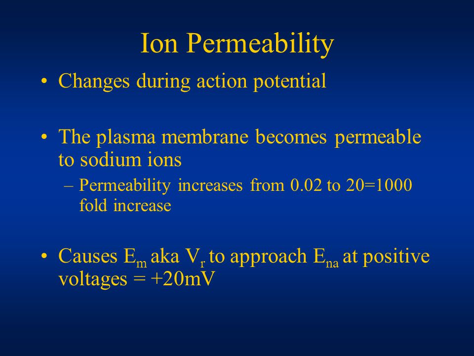 Ion Permeability Changes during action potential The plasma membrane becomes permeable to sodium ions –Permeability increases from 0.02 to 20=1000 fold increase Causes E m aka V r to approach E na at positive voltages = +20mV