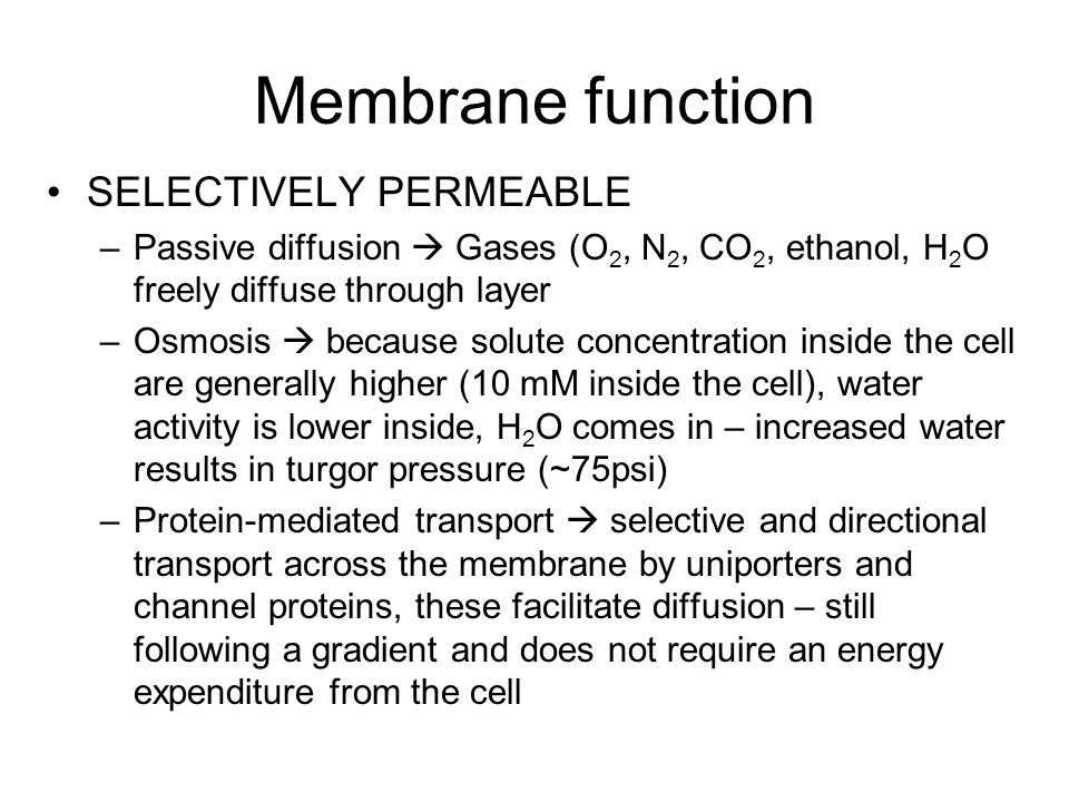 Membrane function SELECTIVELY PERMEABLE –Passive diffusion  Gases (O 2, N 2, CO 2, ethanol, H 2 O freely diffuse through layer –Osmosis  because solute concentration inside the cell are generally higher (10 mM inside the cell), water activity is lower inside, H 2 O comes in – increased water results in turgor pressure (~75psi) –Protein-mediated transport  selective and directional transport across the membrane by uniporters and channel proteins, these facilitate diffusion – still following a gradient and does not require an energy expenditure from the cell