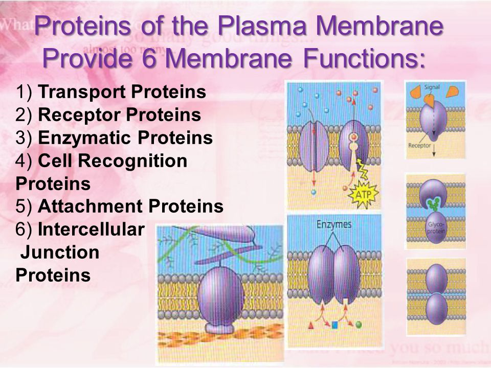 structure and function of biological membranes essay Membranes are essential components of all cells (a) identify three macromolecules that are components of the plasma membrane in a eukaryotic cell and discuss the structure and function of each.