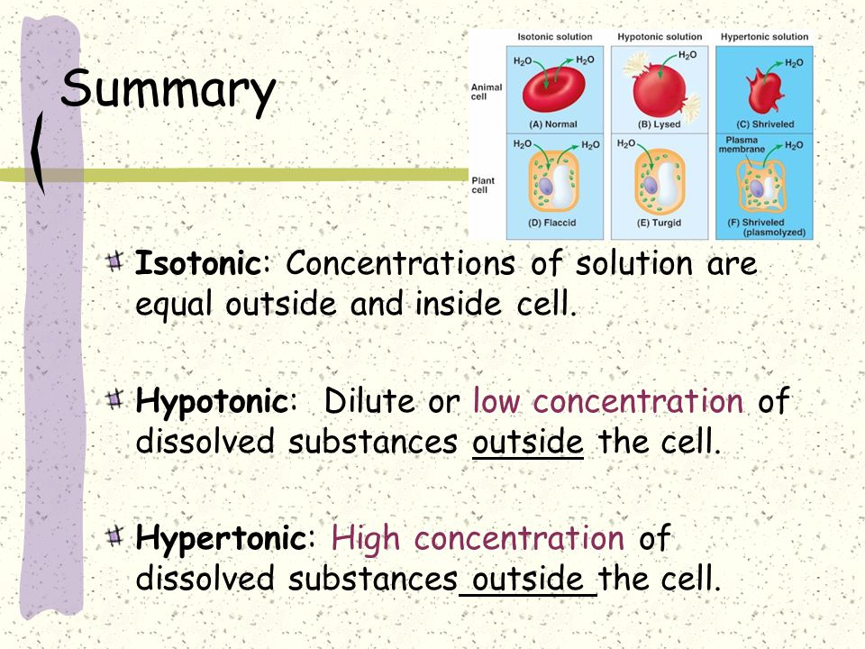 Summary Isotonic: Concentrations of solution are equal outside and inside cell.