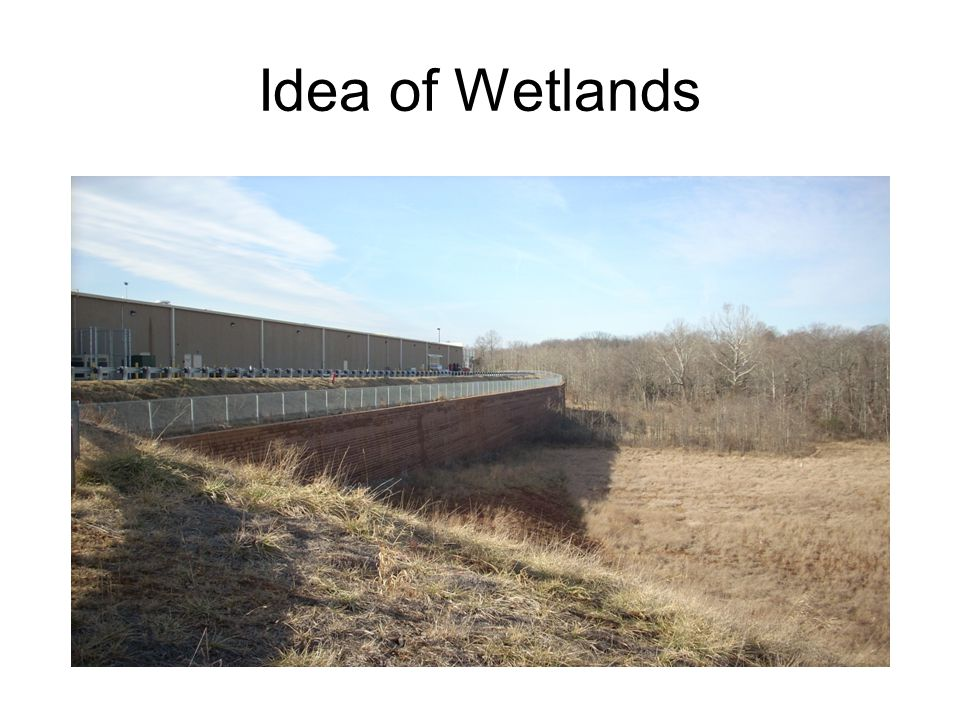 Idea of Wetlands