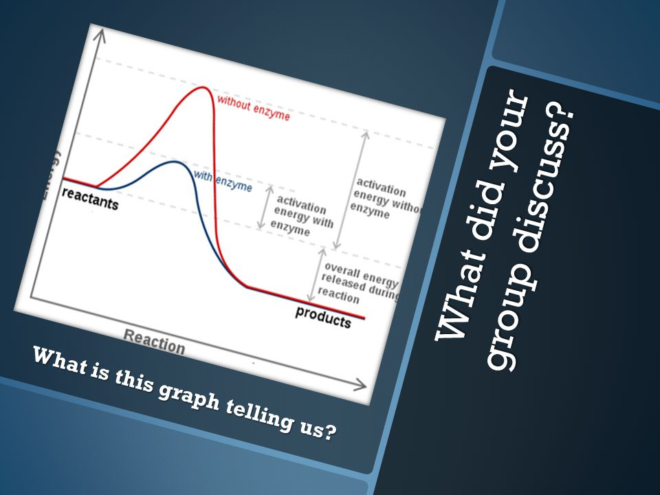 What did your group discuss What is this graph telling us