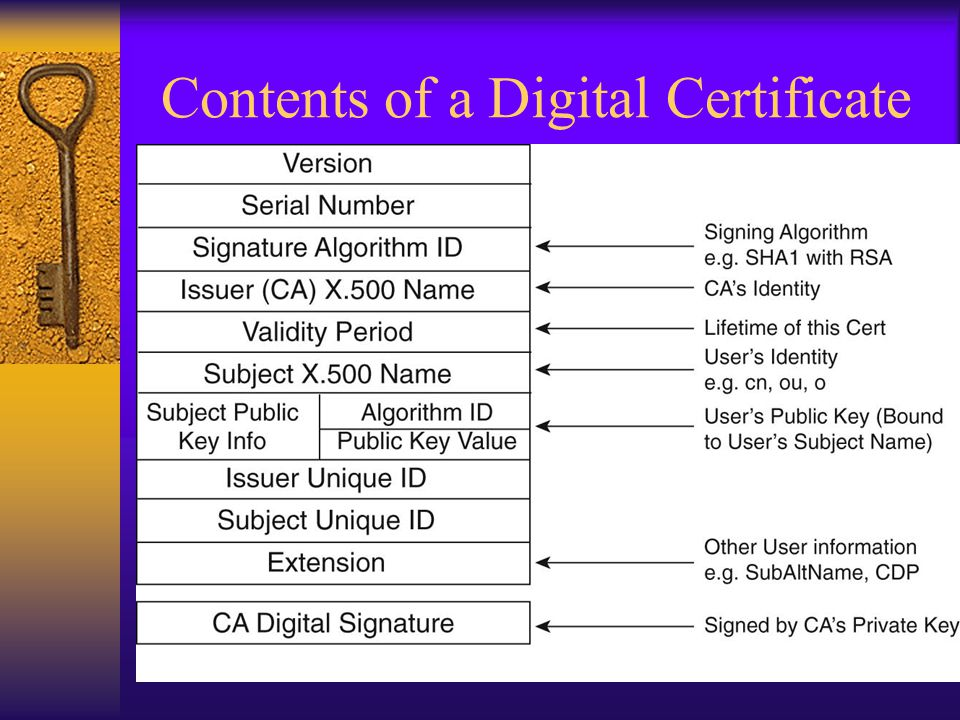 Contents of a Digital Certificate