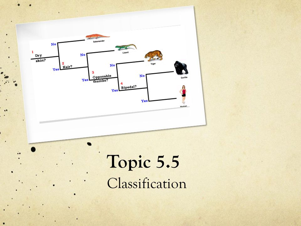 Topic 5.5 Classification