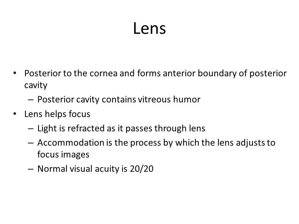 Posterior to the cornea and forms anterior boundary of posterior cavity – Posterior cavity contains vitreous humor Lens helps focus – Light is refracted as it passes through lens – Accommodation is the process by which the lens adjusts to focus images – Normal visual acuity is 20/20 Lens