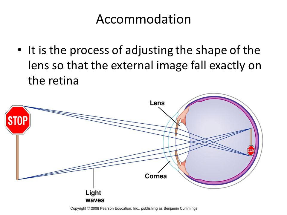 Accommodation It is the process of adjusting the shape of the lens so that the external image fall exactly on the retina