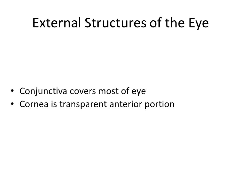 External Structures of the Eye Conjunctiva covers most of eye Cornea is transparent anterior portion