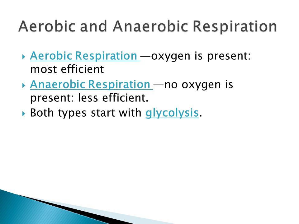  Aerobic Respiration —oxygen is present: most efficient  Anaerobic Respiration —no oxygen is present: less efficient.