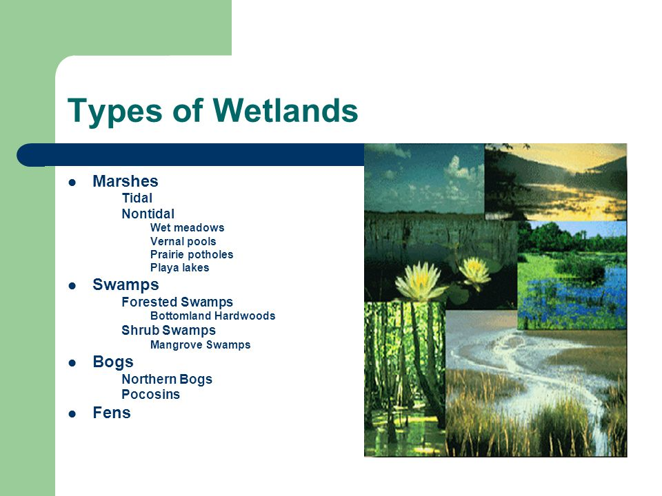 Types of Wetlands Marshes Tidal Nontidal Wet meadows Vernal pools Prairie potholes Playa lakes Swamps Forested Swamps Bottomland Hardwoods Shrub Swamps Mangrove Swamps Bogs Northern Bogs Pocosins Fens