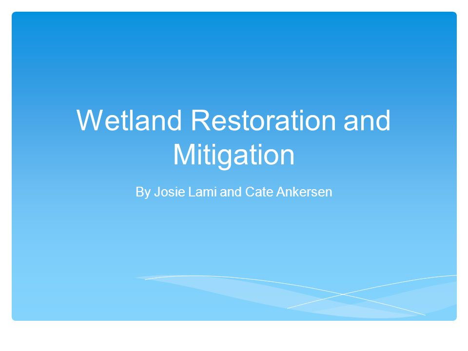 Wetland Restoration and Mitigation By Josie Lami and Cate Ankersen