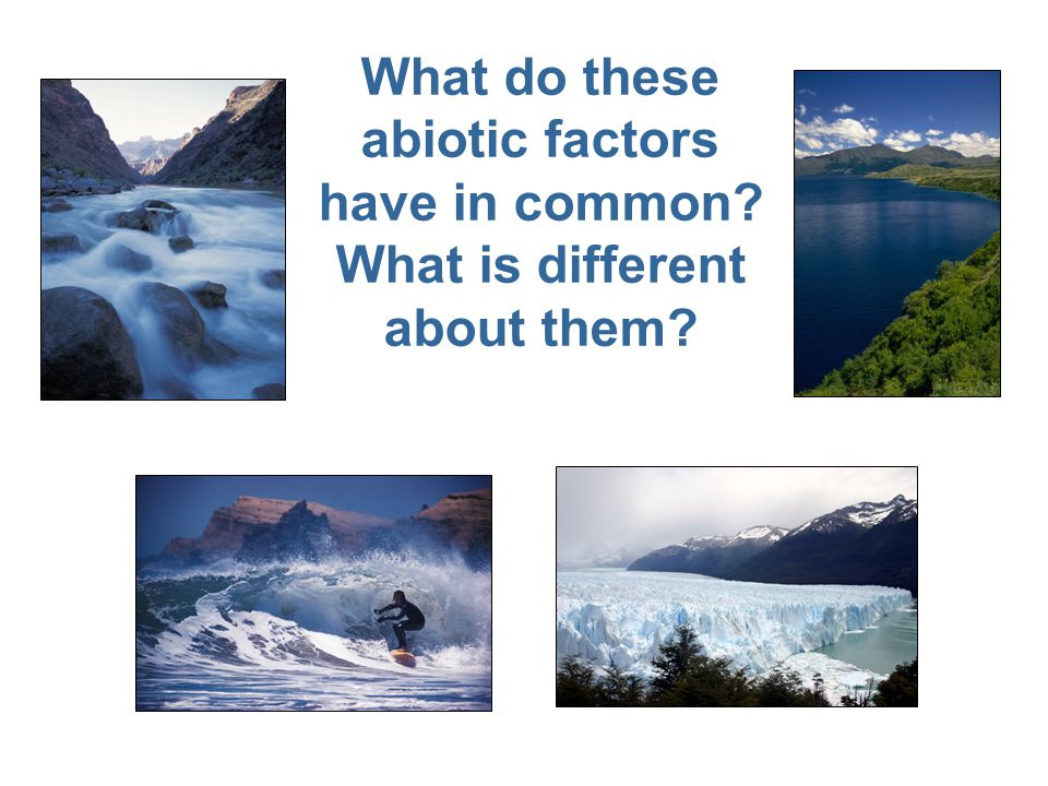Three out of the four sources of water (lake, river, ocean) include both biotic and abiotic factors; therefore, they are considered communities or ecosystems.