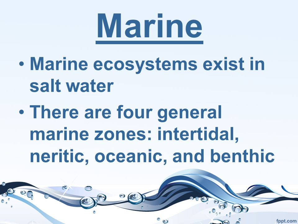 Marine Marine ecosystems exist in salt water There are four general marine zones: intertidal, neritic, oceanic, and benthic