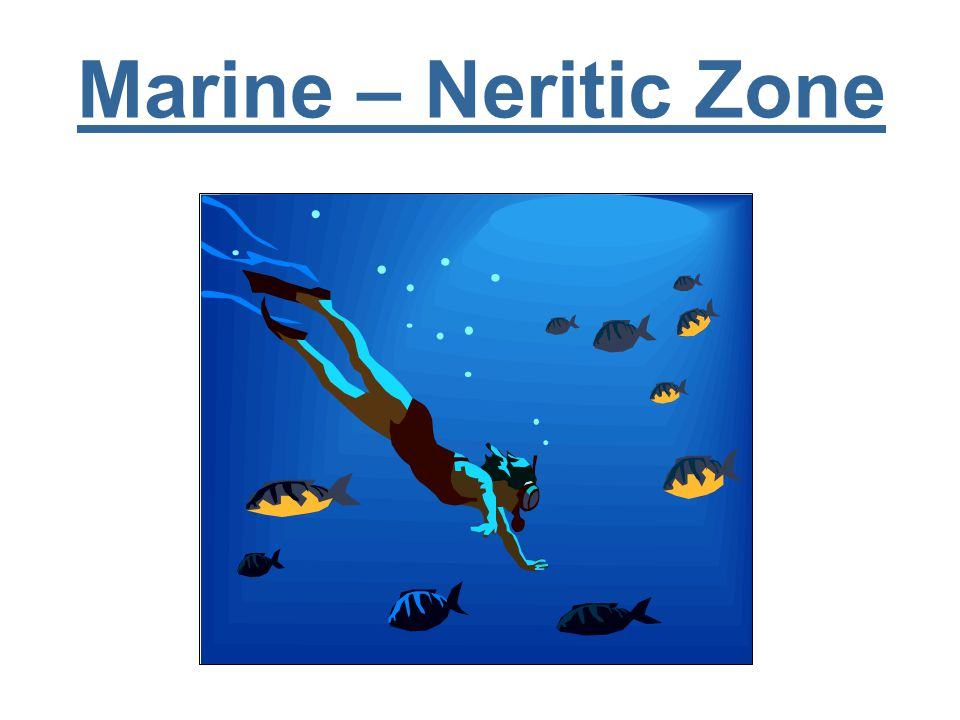 Marine – Neritic Zone