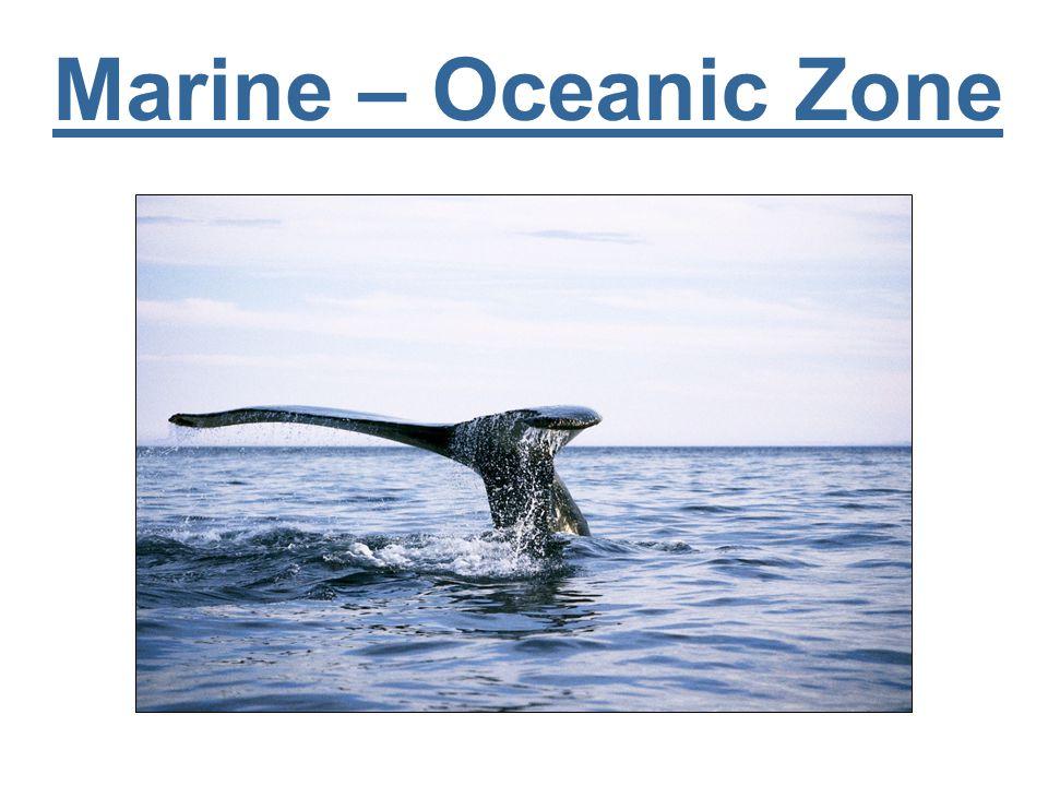 Marine – Oceanic Zone