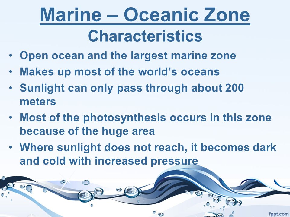 Marine – Oceanic Zone Characteristics Open ocean and the largest marine zone Makes up most of the world's oceans Sunlight can only pass through about 200 meters Most of the photosynthesis occurs in this zone because of the huge area Where sunlight does not reach, it becomes dark and cold with increased pressure