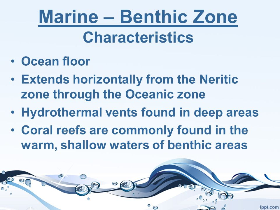 Marine – Benthic Zone Characteristics Ocean floor Extends horizontally from the Neritic zone through the Oceanic zone Hydrothermal vents found in deep areas Coral reefs are commonly found in the warm, shallow waters of benthic areas