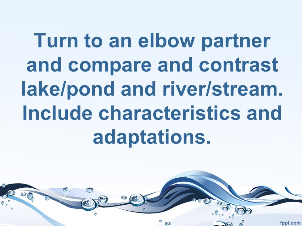 Turn to an elbow partner and compare and contrast lake/pond and river/stream.