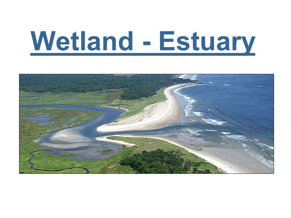 Wetland - Estuary