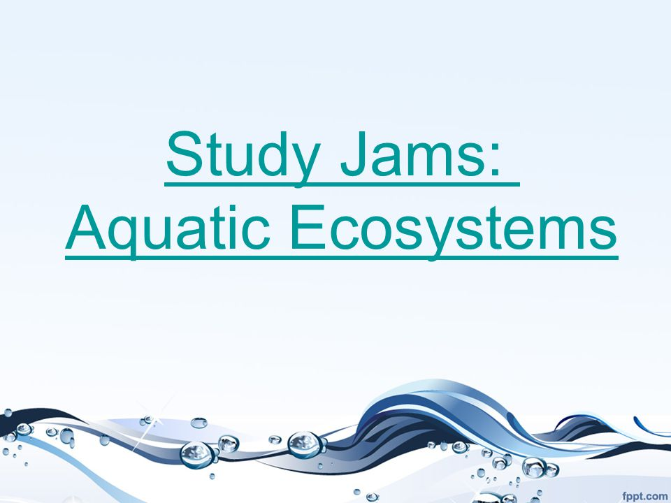 Study Jams: Aquatic Ecosystems