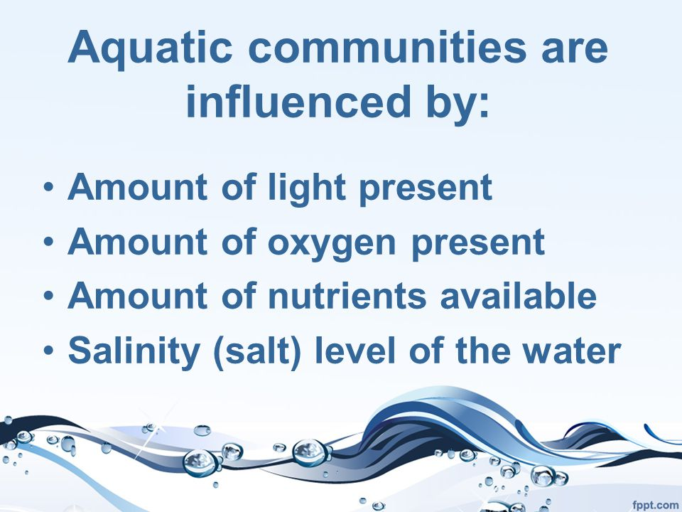 Aquatic communities are influenced by: Amount of light present Amount of oxygen present Amount of nutrients available Salinity (salt) level of the water