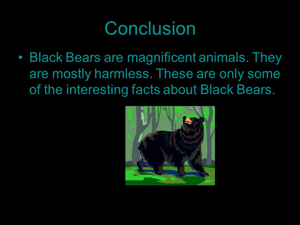 Conclusion Black Bears are magnificent animals. They are mostly harmless.