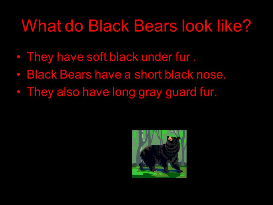 What do Black Bears look like. They have soft black under fur.