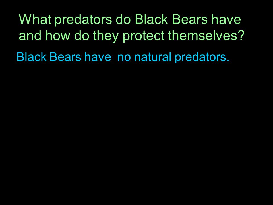 Black Bears have no natural predators.