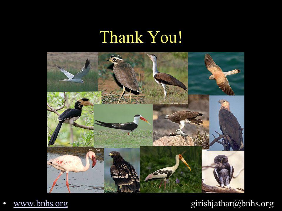 Thank You! www.bnhs.org girishjathar@bnhs.orgwww.bnhs.org
